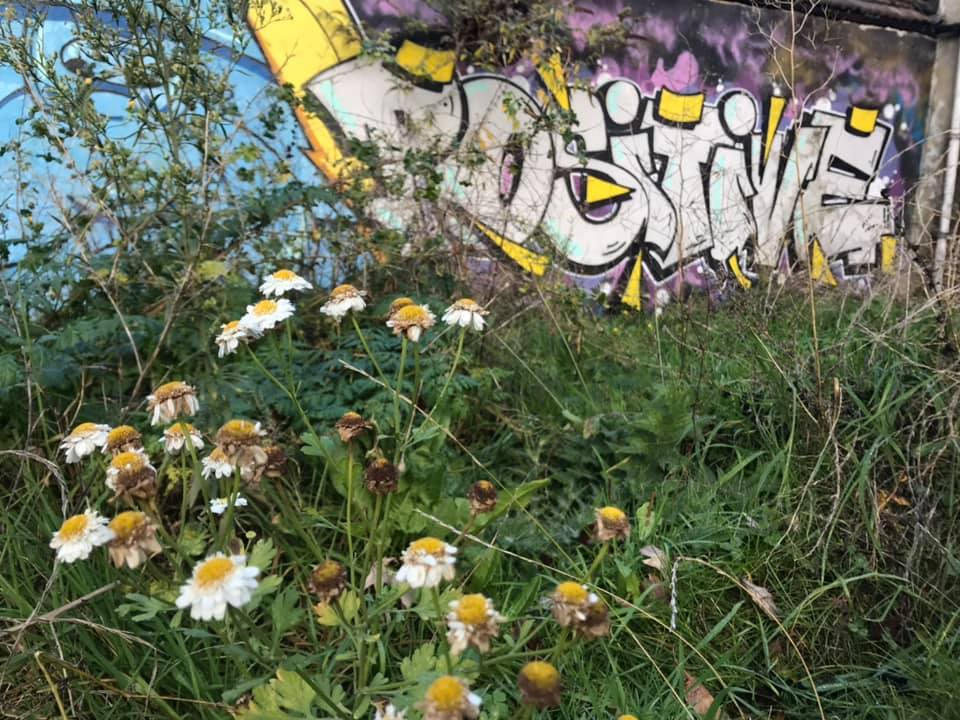 Wildflowers and a postive message